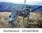 heeler mix eager to continue... | Shutterstock . vector #1014653836