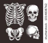 human skeleton sketch set. rib... | Shutterstock .eps vector #1014838762
