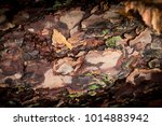 close up of of a piece of pine...   Shutterstock . vector #1014883942
