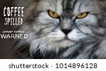 angry looking cat with text ... | Shutterstock . vector #1014896128