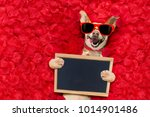 podenco dog resting in  a bed... | Shutterstock . vector #1014901486