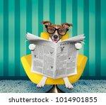 jack russell dog reading...   Shutterstock . vector #1014901855