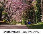 flower sakura thailand blossoms ... | Shutterstock . vector #1014910942