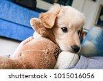 little playful golden retriever ... | Shutterstock . vector #1015016056
