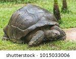 aldabra giant tortoise ... | Shutterstock . vector #1015033006