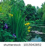 the garden and the lily pond by ... | Shutterstock . vector #1015042852