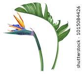 royal strelitzia. tropical... | Shutterstock .eps vector #1015084426