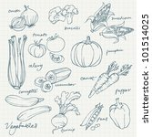 set of vegetables doodles vector | Shutterstock .eps vector #101514025
