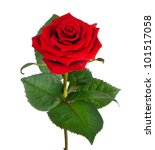 Stock photo single beautiful red rose isolated on white background 101517058