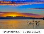 submerged tree in still surf at ...   Shutterstock . vector #1015172626
