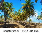 palm grove on the shore of the... | Shutterstock . vector #1015205158
