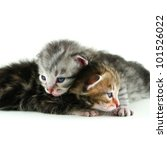 Two newborn kitten isolated on white background - stock photo