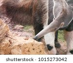 giant anteater in the zoo | Shutterstock . vector #1015273042
