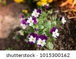 flowers at light leak . image... | Shutterstock . vector #1015300162