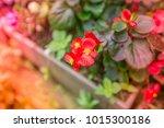 flowers at light leak . image... | Shutterstock . vector #1015300186