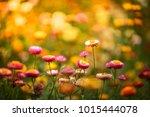 Flower Under Sunlight  Blurred...