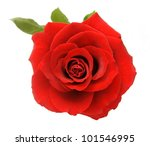 Stock photo red velvet roses with leaves isolated on white background 101546995