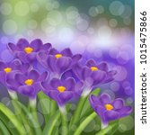the flowers of the crocus are... | Shutterstock .eps vector #1015475866