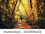 autumn leaf fall  nature | Shutterstock . vector #1015496326