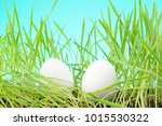 Two White Eggs Among Tall Grass