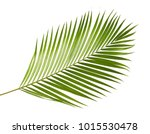 yellow palm leaves  dypsis... | Shutterstock . vector #1015530478