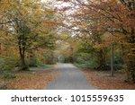 a fall forest | Shutterstock . vector #1015559635