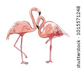 flamingo isolated on background.... | Shutterstock . vector #1015571248
