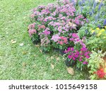 modern garden design | Shutterstock . vector #1015649158