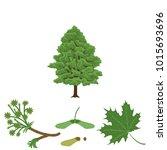 tree maple  branch of maple ... | Shutterstock .eps vector #1015693696