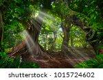 asian rainforest jungle | Shutterstock . vector #1015724602