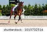Small photo of Dressage horse in the test, trot strengthening suspension phase.