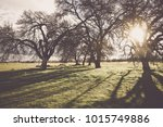 nature background with vintage... | Shutterstock . vector #1015749886