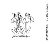 snowdrops vector illustration.... | Shutterstock .eps vector #1015772638
