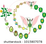 life cycle of flowering ... | Shutterstock .eps vector #1015807078