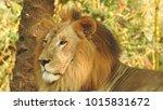 lion looking regal standing ... | Shutterstock . vector #1015831672
