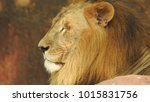 lion looking regal standing ... | Shutterstock . vector #1015831756