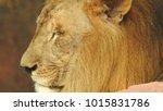 lion looking regal standing ... | Shutterstock . vector #1015831786