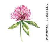 Flower Of Red Clover With...