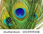 three peacock features tops...   Shutterstock . vector #1015949248
