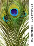 crossed peacock features close...   Shutterstock . vector #1015949395