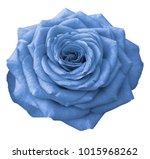 light blue  rose  on a white... | Shutterstock . vector #1015968262