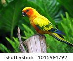 many parrots are vividly... | Shutterstock . vector #1015984792