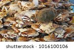 Small photo of Crab called Portunus pelagicus,flower crab,blue crab,blue swimmer crab,blue manna crab,sand crab, rajungan, ketam bunga or alimasag sell in wet market
