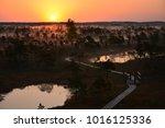 sunrise in swamp kemeri latvia    Shutterstock . vector #1016125336