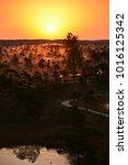 sunrise in swamp kemeri latvia    Shutterstock . vector #1016125342