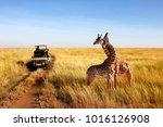 wild giraffes in african... | Shutterstock . vector #1016126908