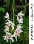 beautiful orchid in the garden | Shutterstock . vector #1016196916