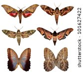collection of butterfly moth... | Shutterstock . vector #101627422