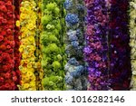 colorful of flower in the tube. ... | Shutterstock . vector #1016282146