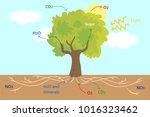 vector illustration of the... | Shutterstock .eps vector #1016323462